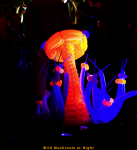 Wild Mushroom at Night