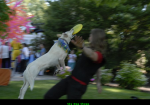 Sky Dog Shows