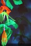 Illuminated Flora