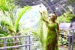 Rain Forest Dome