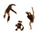 monkeys:ants