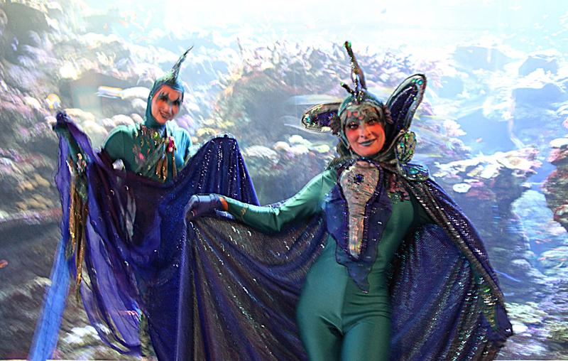 Siren in the Aquarium